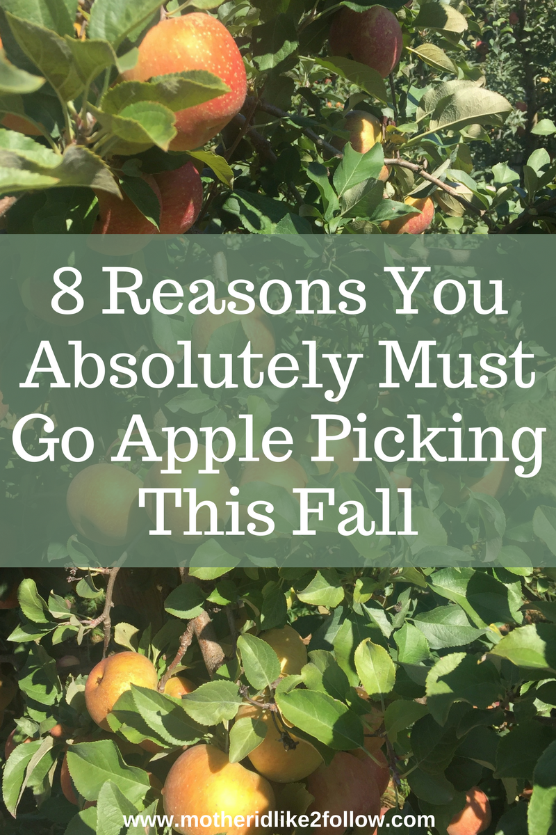 8 Reasons You Absolutely Must Go Apple Picking This Fall